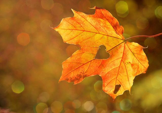 KALLE-Herbstfest